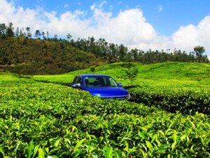 Perkebunan teh di kawasan Ciwidey, Kab, Bandung.