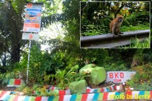 Tanda keterangan jalan di Kelok 44 dan monyet - monyet liar di sisi jalan.